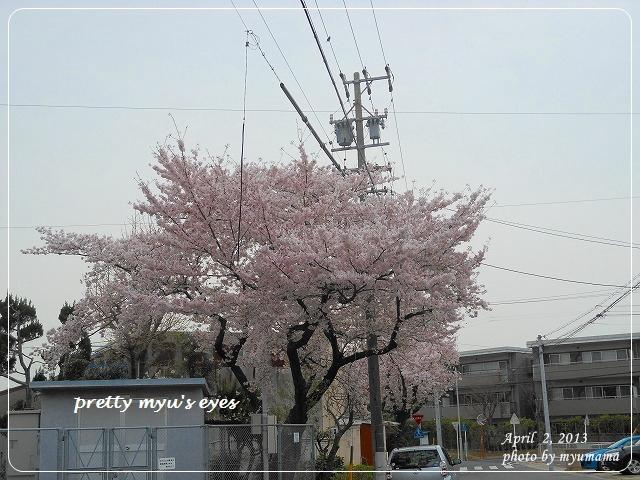 写真: s-011
