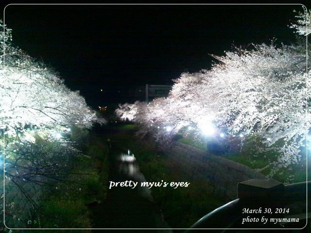 写真: s-DSC_0584