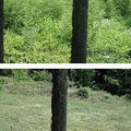 Photos: 7月27日「笹薮刈り取り」