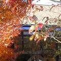 Photos: 11月25日「カフェの紅葉」