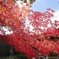 Photos: 11月10日「紅葉」