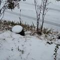 Photos: 12月4日「29日の雪」