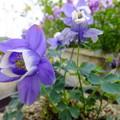 Photos: 私、いま、咲いてますよ~( 」゚Д゚)」