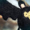 Photos: bat
