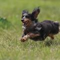 Photos: 飛行犬♪