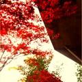 Rosso Rosso Rosso