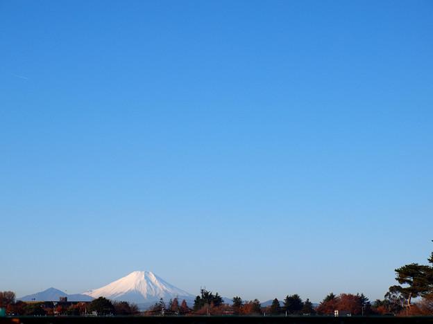 写真: 冬の日の朝