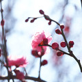 写真: 立春を待たず