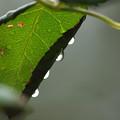 時雨の音階
