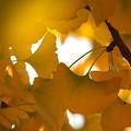 秋の日の夢