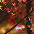 きらきらと秋