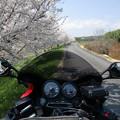 桜見てきました。13_04_CIMG6343