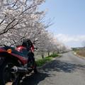 桜見てきました。13_04_CIMG6346