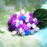 八月の紫陽花