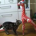 Photos: 猫と麒麟。