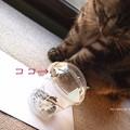 Photos: こんにちは。(ヤマトシジミ飼育)
