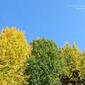 Photos: 秋の色。
