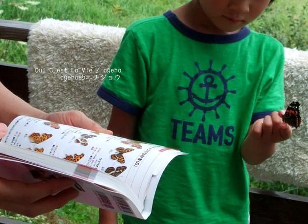 甥の指乗り。すかさず図鑑を開く母。(アカタテハat信州)