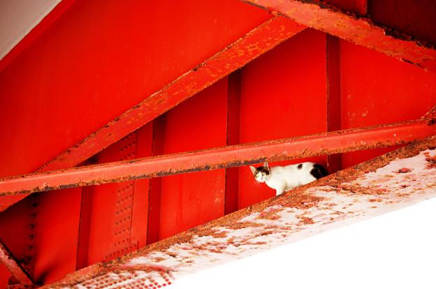 海岸の猫(汽船乗り場から)