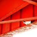 写真: 海岸の猫(汽船乗り場から)