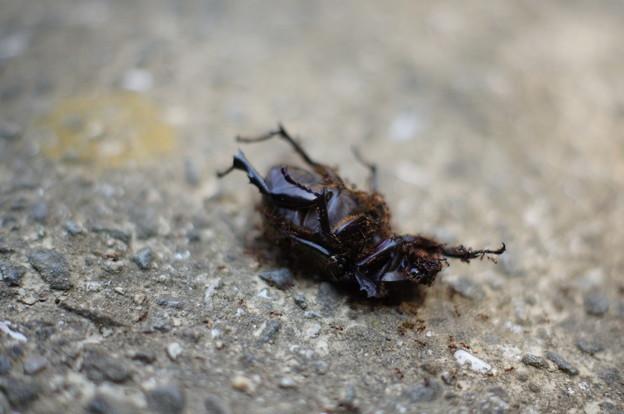 虫の死(汽船乗り場から)