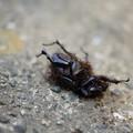 写真: 虫の死(汽船乗り場から)
