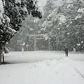 Photos: 雪の神宮 その1