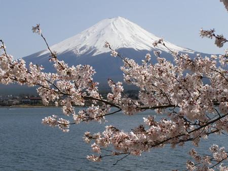 逝く春や富士を惜しみて咲く桜