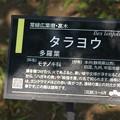 写真: ハガキの樹