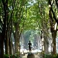 Photos: 欅のグリーンベルト