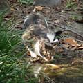 Photos: 狙う猫