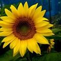 Photos: ーキミは僕の太陽ー