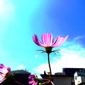 Photos: ☆青空に映える貴女☆