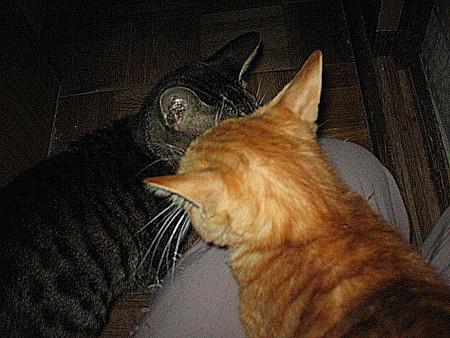 2005年10月27日のボクチン1歳
