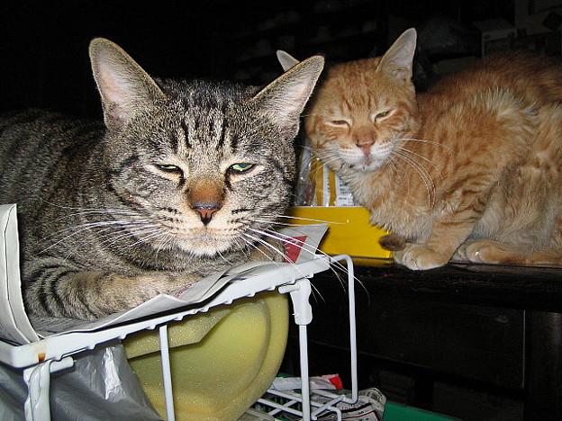 写真: 2006年3月2日のボクチン(1歳半)