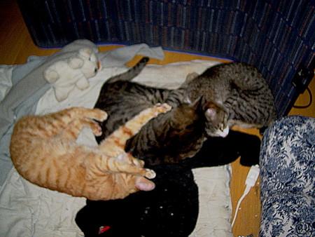2007年3月14日のボクチン(2歳半)