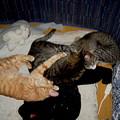 写真: 2007年3月14日のボクチン(2歳半)