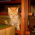 写真: 2007年12月21日ボクチン(3歳)