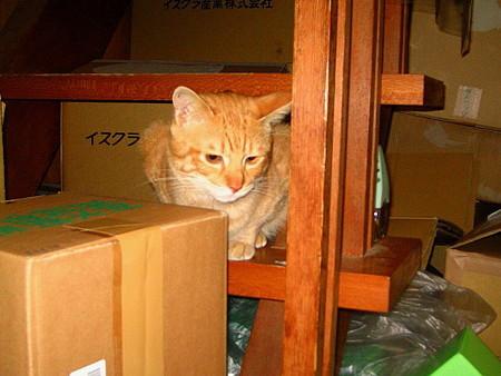 2007年12月21日ボクチン(3歳)