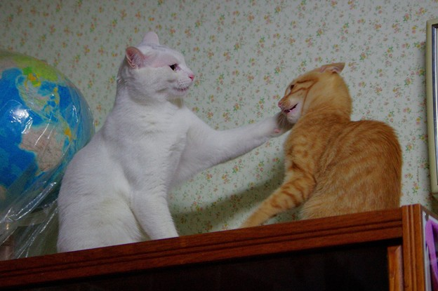 写真: シロちゃんとトラちゃん