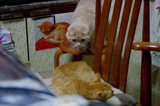 写真: トラちゃんとスコちゃんとボクチンの写真