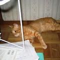 Photos: 2008年8月7日のボクチン(4歳)