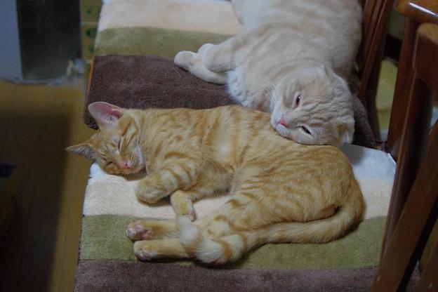 写真: トラちゃんとスコちゃん