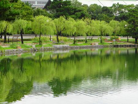 大濠公園柳の映り込み