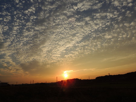 鱗雲の夕陽
