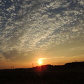 写真: 鱗雲の夕陽