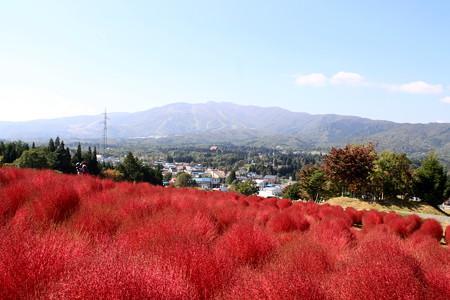 ひるがの高原:コキアと大日ヶ岳
