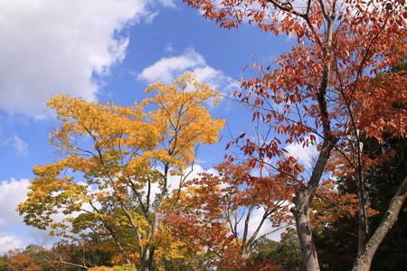 昭和の森の紅葉