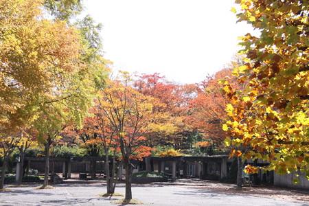 緑化センターの秋景色