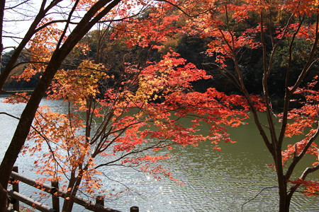 大沢池の紅葉